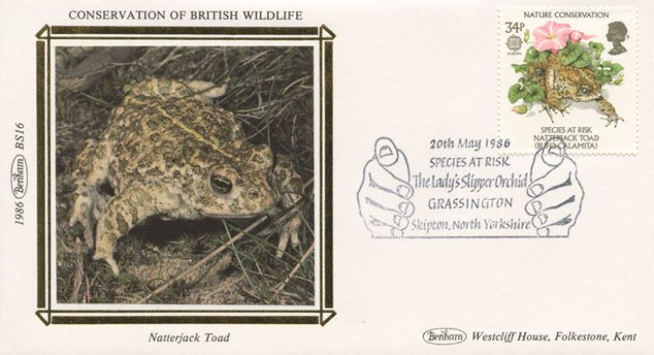 Species at Risk, Natterjack Toad