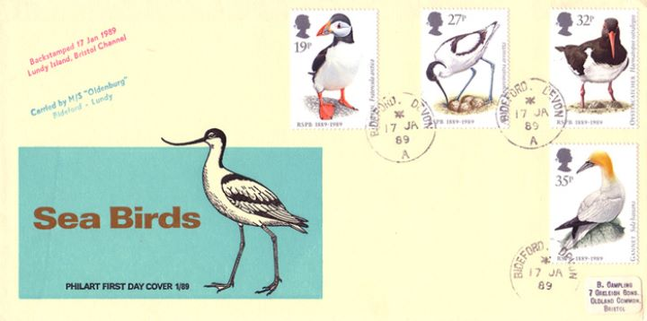 Sea Birds, The Avocet