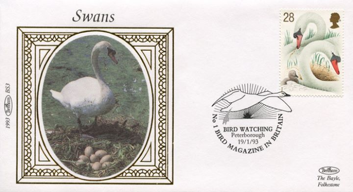 Swans, Swan and eggs