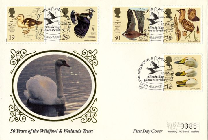 Wildfowl & Wetlands Trust, Swan