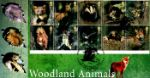 Woodland Animals Fox Producer: Steven Scott Series: Scott (107)