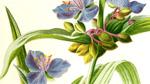 Plants Theme