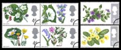 View enlarged 'Wild Flowers' Image.