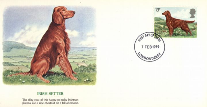 British Dogs, Irish Setter
