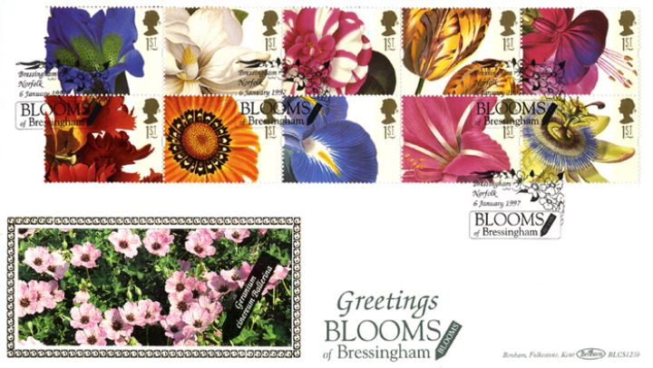 Flower Paintings (Greetings), Geraniums at Blooms