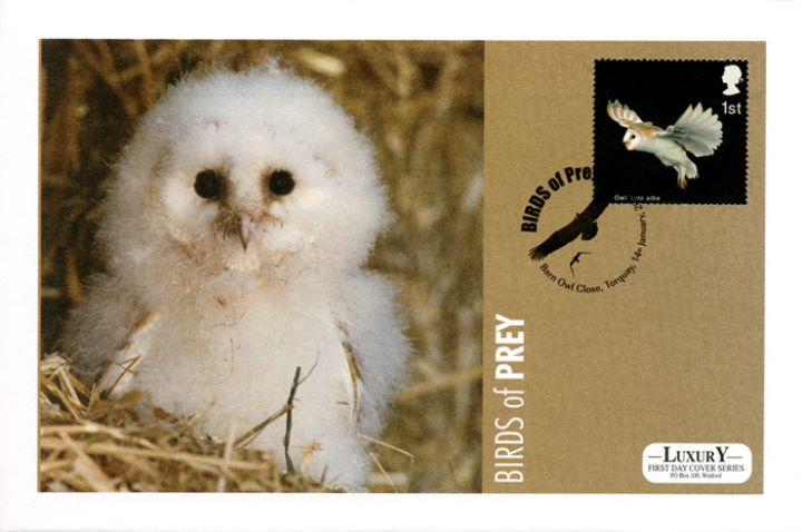 Birds of Prey, Barn Owl Chick