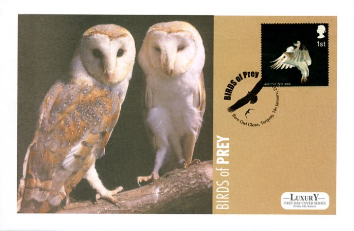 Birds of Prey, Barn Owls