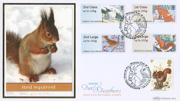 Winter Fur & Feathers, Red Squirrel
