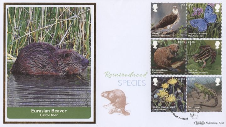 Re-introduced Species, Eurasian Beaver
