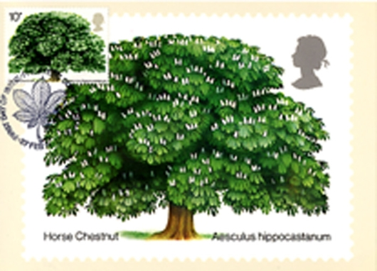 British Trees - The Horse Chestnut PHQ Card