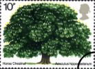 View enlarged 'British Trees - The Horse Chestnut' Image.