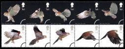 View enlarged 'Birds of Prey' Image.