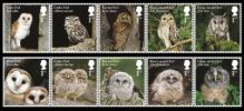 View enlarged 'Owls' Image.